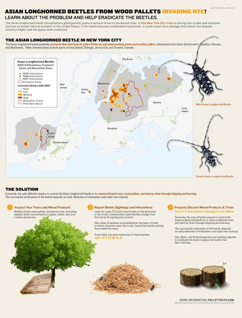 Asian Longhorned Beetles from Chinese Wood Pallets Invading New York City! [Infographic]
