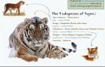 Lost Cat: Troubled Tigers