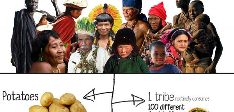 Tribal Peoples Contributions to Humanity