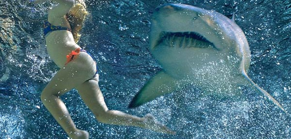 Shark Bytes: How and Where Sharks Attack [Infographic]